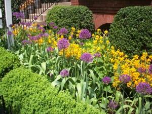purple, orange flowers